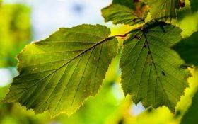 ساخت برگهای مصنوعی با الهام از دنیای واقعی