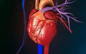 ۳ راهکار برای پیشگیری از مرگ زودهنگام قلبی عروقی