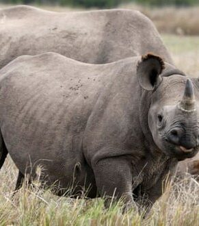 خطر انقراض حیوانات عظیم الجثه در ۱۰۰ سال آینده