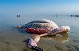 مشخص شدن علت مرگ ۸۰۰۰ هزار پرنده در میانکاله
