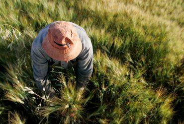 کود هوشمندی که از آلودگی آب و خاک جلوگیری می کند